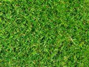 EK Voetbal: Welke bondscoaches zien we op Euro 2020?